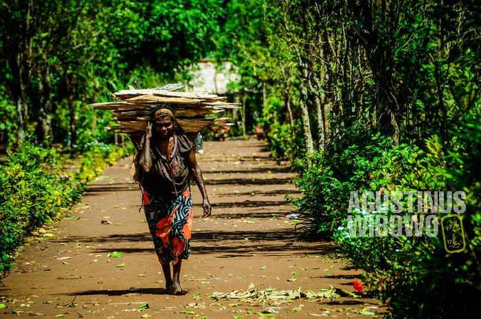 Perempuan Papua harus bekerja sangat keras (AGUSTINUS WIBOWO)