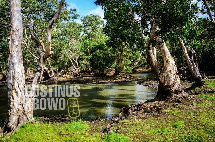 Empang tempat Pali Abai tewas secara misterius (AGUSTINUS WIBOWO)