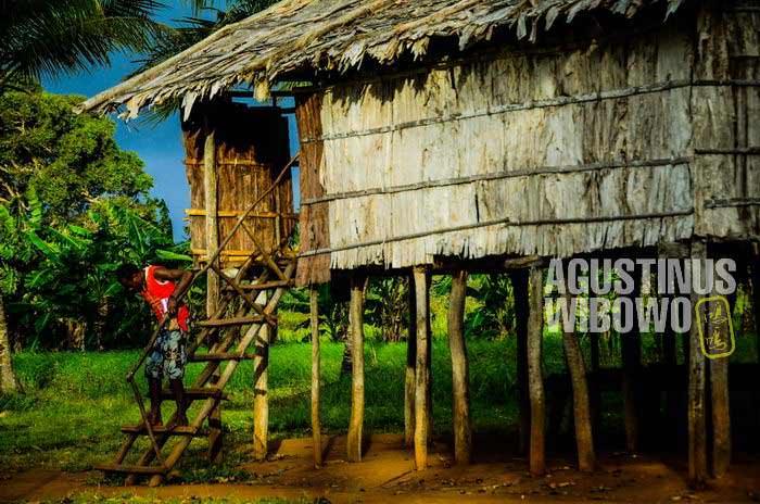 Rumah panggung ini adalah pengaruh dari Australia (AGUSTINUS WIBOWO)