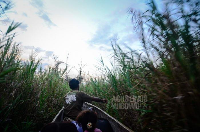 Menerjang rerumputan pekat dengan perahu