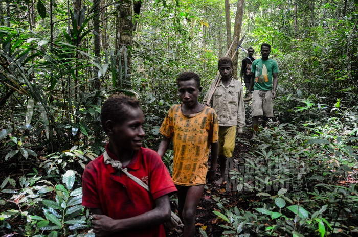 Menjelajah hutan mencari makanan.