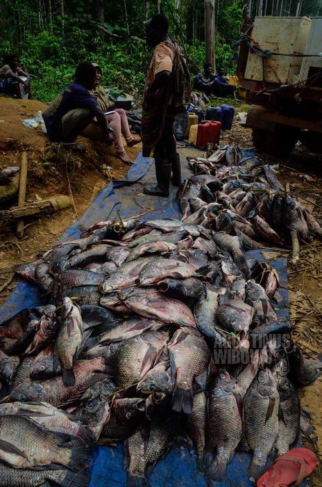 Begitu banyak ikan harus dibuang