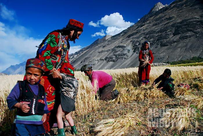 Para lelaki dan perempuan Wakhan bekerja bersama di ladang