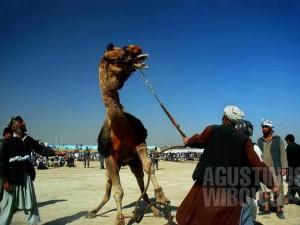 1pic1day-140318-afghanistan-naoruz