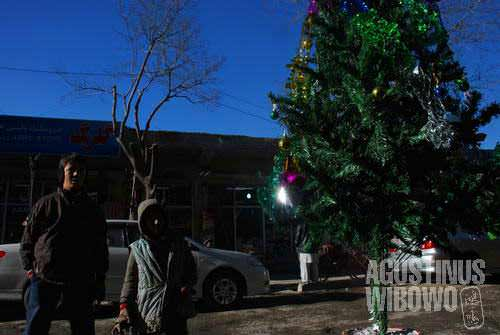 Christmas trees in Kabul streets, who expected?