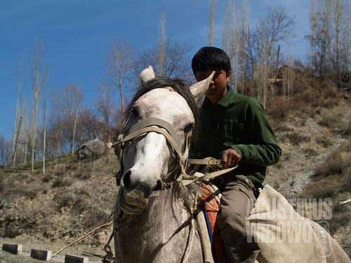 Horse is still important transport in mountainous area like Shakhimardan
