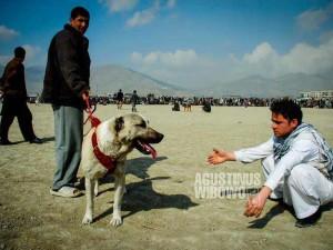 bl-AFG-dogfighting02b