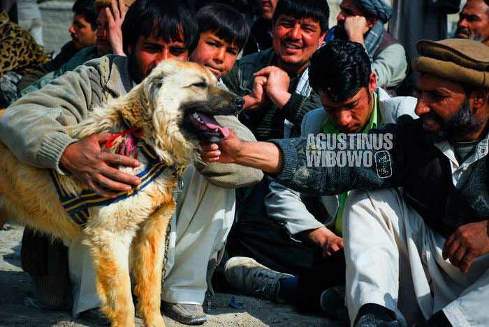 bl-AFG-dogfighting04