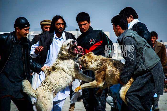 bl-AFG-dogfighting06