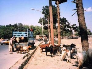 gl-2003-pkaf-kabul-068