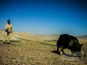 Tim penjinak ranjau menggunakan anjing yang sudah terlatih untuk melacak ranjau. (AGUSTINUS WIBOWO)