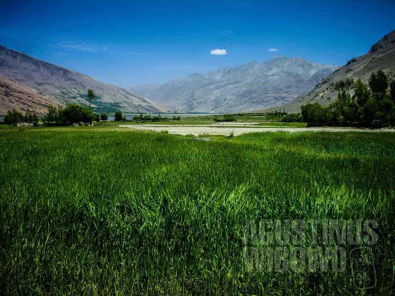 7.Hijaunya ladang di Wakhan (AGUSTINUS WIBOWO)