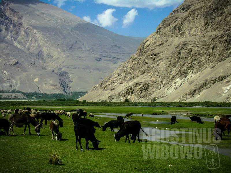 1.Berjam-jam yang kulihat hanya kawanan domba merumput di padang lengang (AGUSTINUS WIBOWO)