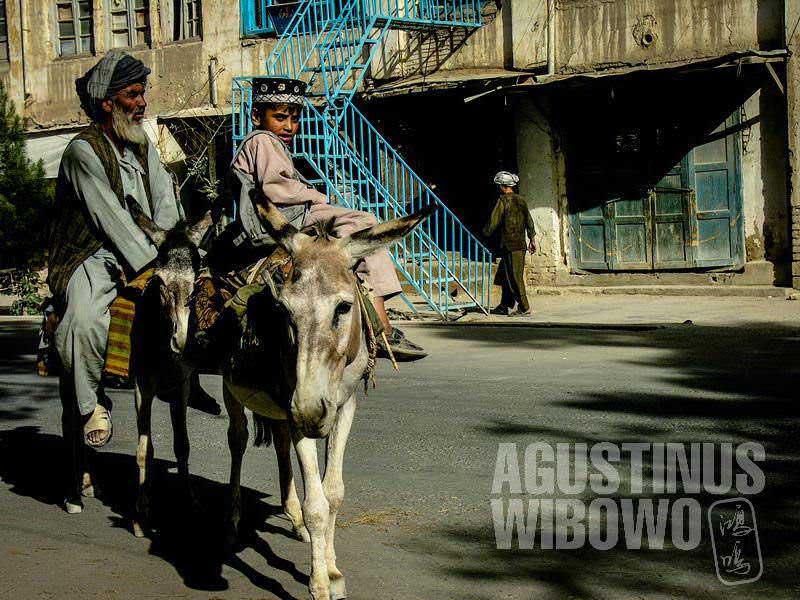 1.Keledai masih menjadi alat transportasi utama di ibukota provinsi ini (AGUSTINUS WIBOWO)