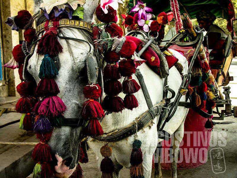 3.Kuda pun berwarna-warni (AGUSTINUS WIBOWO)