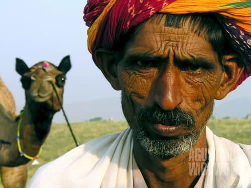 Pedagang unta dari Nagaur. (AGUSTINUS WIBOWO)