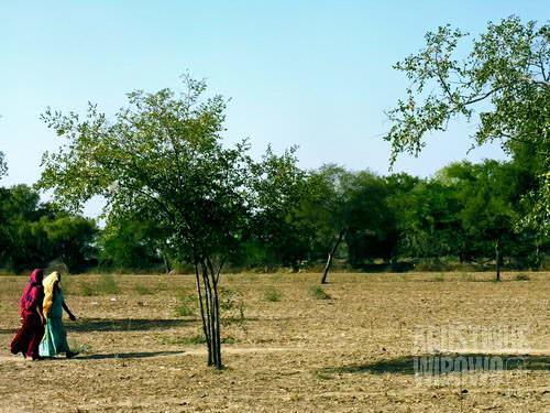 Di desa tandus ini, setiap rumput dan pohon punya nyawa (AGUSTINUS WIBOWO)