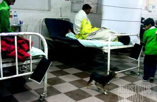 Anjing di ruang gawat darurat (AGUSTINUS WIBOWO)