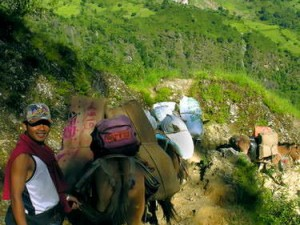 Barisan keledai menuruni tebing curam (AGUSTINUS WIBOWO)