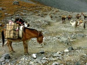 Jalan turum yang curam menuju Muktinath. (AGUSTINUS WIBOWO)