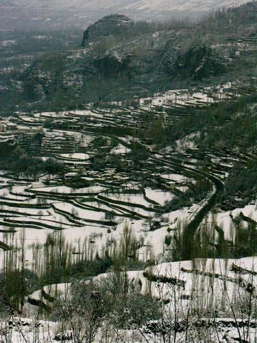 Persawahan di lereng bukit Karimabad dibungkus salju (AGUSTINUS WIBOWO)