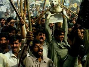 Anjing sungguhan pun jadi korban dalam kemarahan terhadap Bush-Mush (AGUSTINUS WIBOWO)