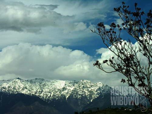 Kandar di puncak pegunungan Kashmir (AGUSTINUS WIBOWO)