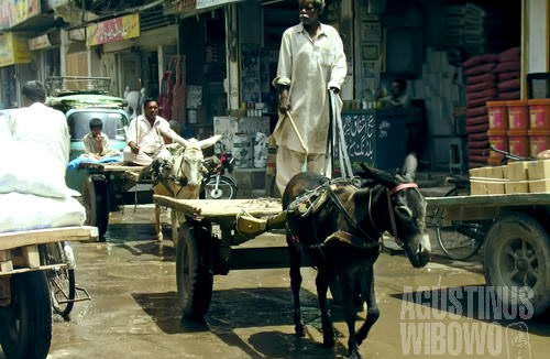 Kereta keledai, masa lalu yang berbaur dengan modernitas (AGUSTINUS WIBOWO)