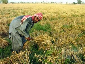 Punjab, 'lima sungai', adalah propinsi tersubur di Pakistan. (AGUSTINUS WIBOWO)
