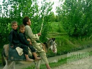 Bocah-bocah Safed Sang di atas keledai (AGUSTINUS WIBOWO)