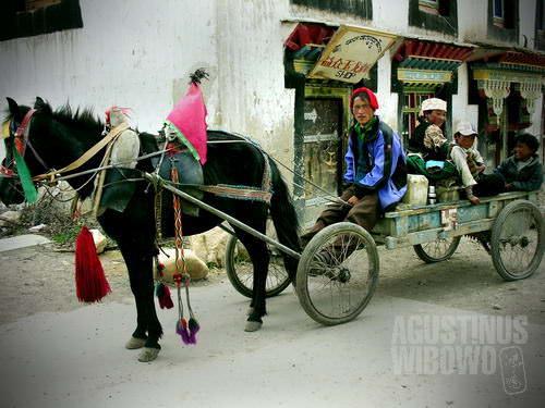 Kereta kuda di Tashirom. (AGUSTINUS WIBOWO)